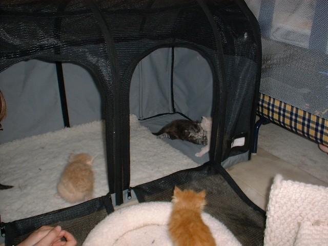 kittens07