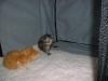 kittens08