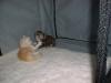 kittens09