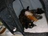 kittens15