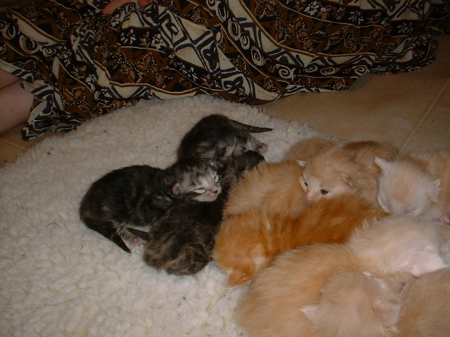 kittens06